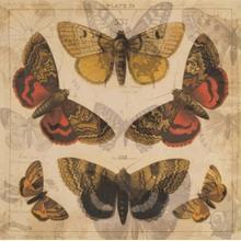 Butterfly Overlay II
