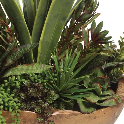 Salar Succulents