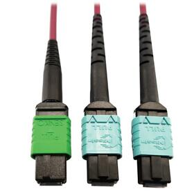 400G Multimode 50/125 OM4 Plenum Fiber Optic Cable, 16F MTP/MPO-APC to (x2) 12F MTP/MPO-UPC (F/F), Magenta, 3 m