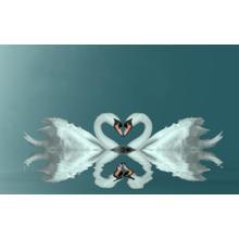 Two Swans (framed)