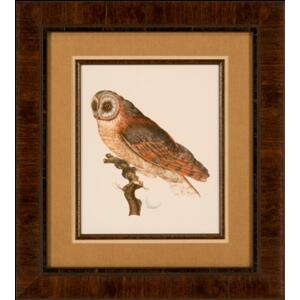 Nozeman Owls Iv