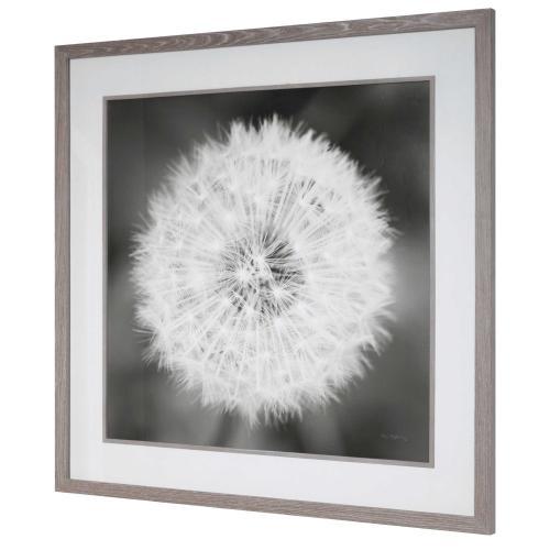 Dandelion Seedhead Framed Print