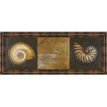 """""""Seashells I"""" By Patricia Pinto Framed Print Wall Art"""