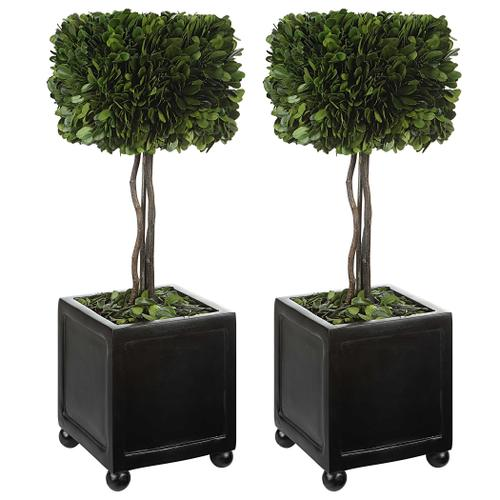 Uttermost - Preserved Boxwood Square Topiaries, S/2
