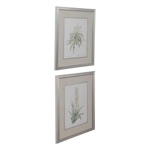 Plant Study Framed Prints, S/2