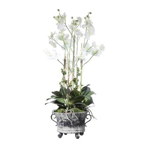 Neruda Potted Orchid