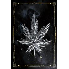 Carpe Cannabis By Yellow Caf e