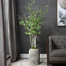 See Details - Aldis Potted River Birch