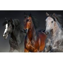 S59889  Small - Three Horses