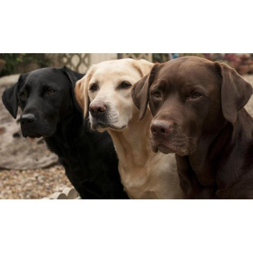 Product Image - FS55278  Framed Small - Three Shades of Loyalty