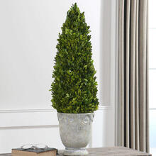 See Details - Preserved Boxwood Cone Topiary