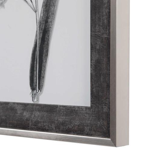 Classic Botany Framed Prints, S/8