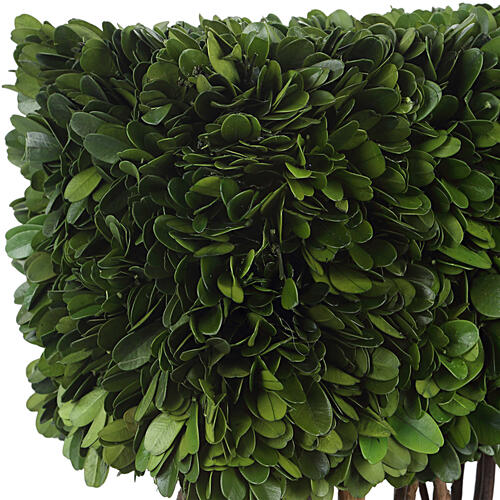 Uttermost - Preserved Boxwood Rectangular Topiary
