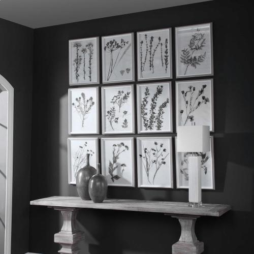Contemporary Botanicals Framed Prints, S/12