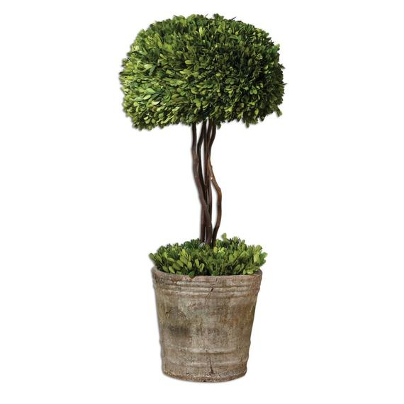 Preserved Boxwood Tree Topiary