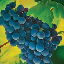 See Details - Grapes Printed Canvas Painting