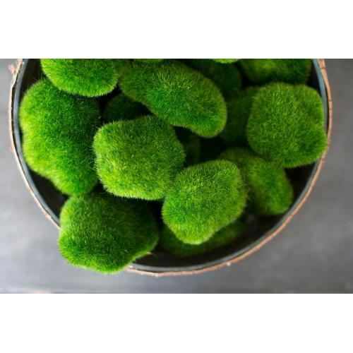 12 pieces Moss Chunks