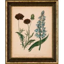 Cottage Florals Vi