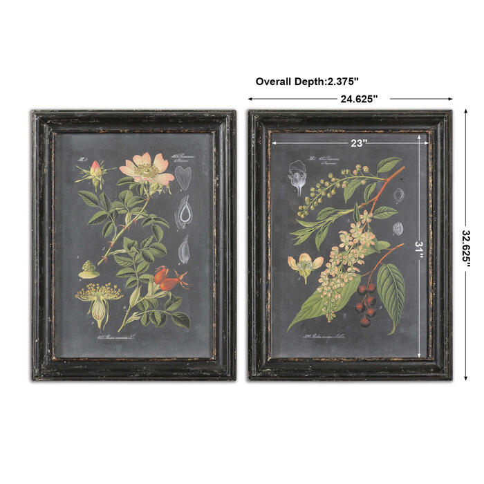 Uttermost - Midnight Botanicals Framed Prints, S/2