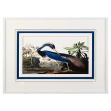 Audubon's Blue Heron