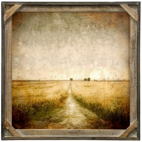 Style Craft - Wheat Trail  Textured Framed Print  20in X 20in