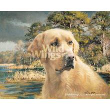 """View Product - Flash-Yellow Lab Dog - Limited Edition Print 12""""H x 15""""W"""