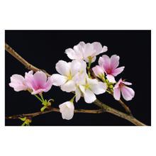 See Details - Cherry Blossom- Giant Art