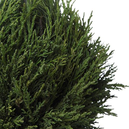 Uttermost - Cypress Triple Topiary
