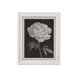 Black and White Flowers I