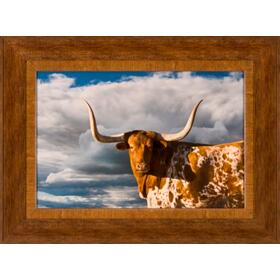 Texas Long Horn