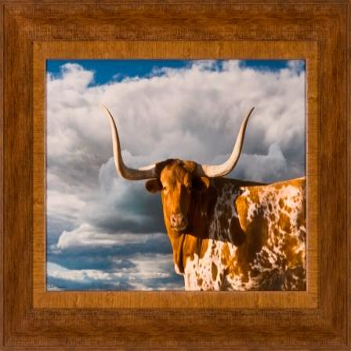 The Ashton Company - Texas Long Horn