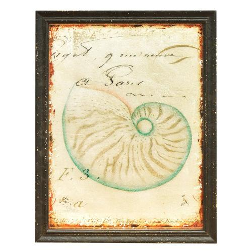 Crestview Collections - Antique Shells 4