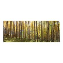 View Product - Sunlit Colorado Trees