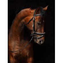 Horse On Black By Mikhail Kondrashov