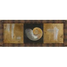 """Seashells Il"" By Patricia Pinto Framed Print Wall Art"