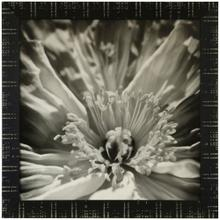 See Details - INNER BEAUTY  36in X 36in  Made in the USA  Textured Framed Print
