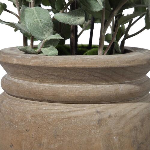 Tassos Potted Olive