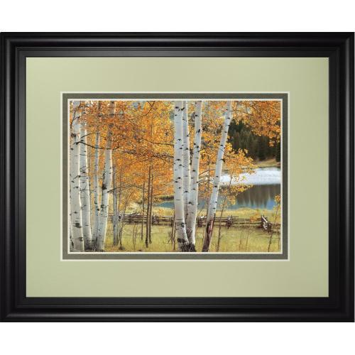 """""""Birch Beauty"""" By Mike Jones Framed Print Wall Art"""