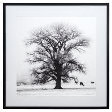 Winter's Morning Fog IV