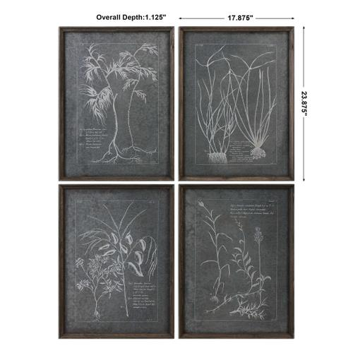 Root Study Framed Prints, S/4