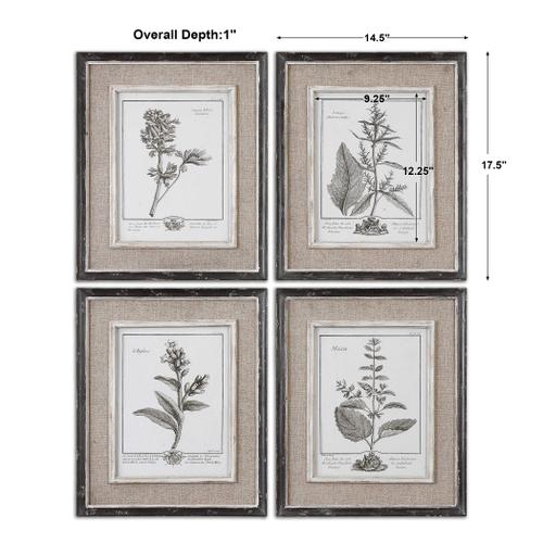 Uttermost - Casual Grey Study Framed Prints, S/4