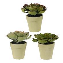 S/3 Succulent