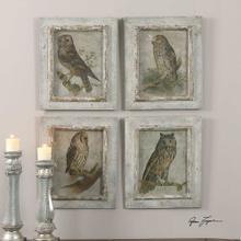 Owls, S/4