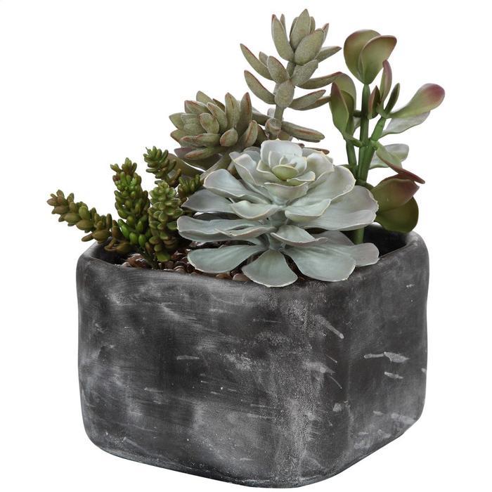 Uttermost - Alverio Succulents