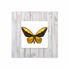 See Details - Yellow Butterfly With Background Miniature Fine Wall Art