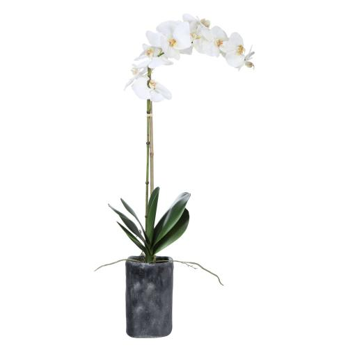 Uttermost - Eponine Orchid
