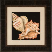 Tandem Shells I