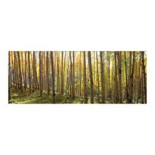 Sunlit Colorado Trees