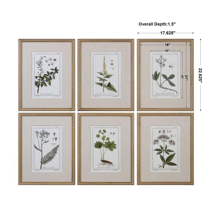 Uttermost - Green Floral Botanical Study Framed Prints, S/6