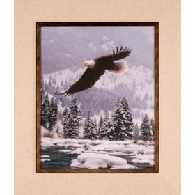 Free Flight - 20x16 - Print